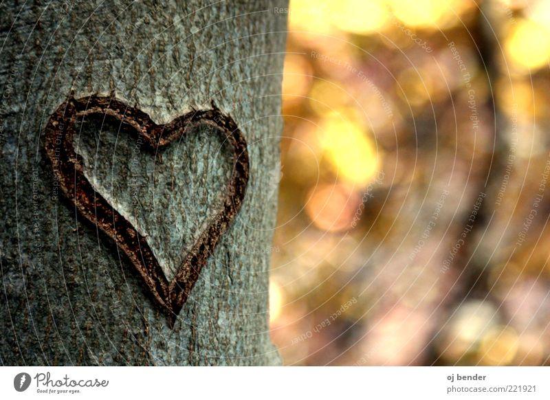 Herz im Herbst Holz Gefühle Glück Verliebtheit Romantik Liebe Farbfoto Außenaufnahme Menschenleer Abend Sonnenlicht Unschärfe Totale Baumstamm Erinnerung