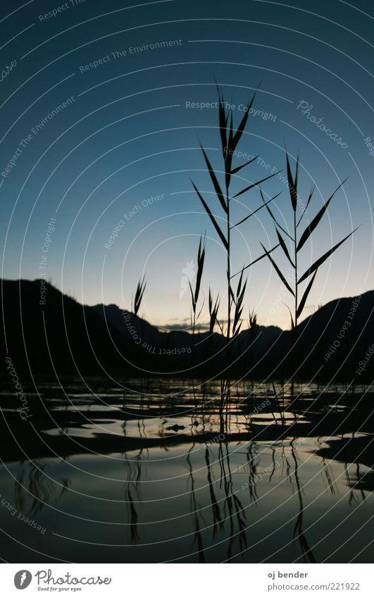 Blau Lake Natur Wasser Sommer ruhig Gras See Alpen Grünpflanze Wasseroberfläche Wolkenloser Himmel Wasserspiegelung Achensee