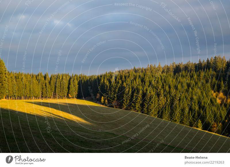 wenn die Schatten länger werden Himmel Natur blau grün Wolken Wald dunkel Herbst Wiese hell Zufriedenheit leuchten Wetter ästhetisch Beginn einzigartig
