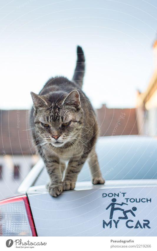 Don't touch my car! Katze Tier Freude lustig Kommunizieren stehen beobachten Coolness Neugier Macht Haustier Wachsamkeit frech Interesse Aggression rebellisch