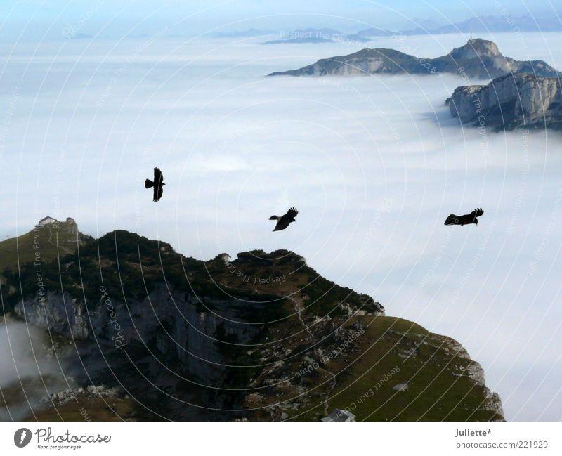 Vogelfrei Natur Landschaft Luft Himmel Wolken Horizont Herbst Wetter Schönes Wetter Nebel Moos Alpen Berge u. Gebirge Gipfel Tier 3 Schwarm Tierpaar Stimmung