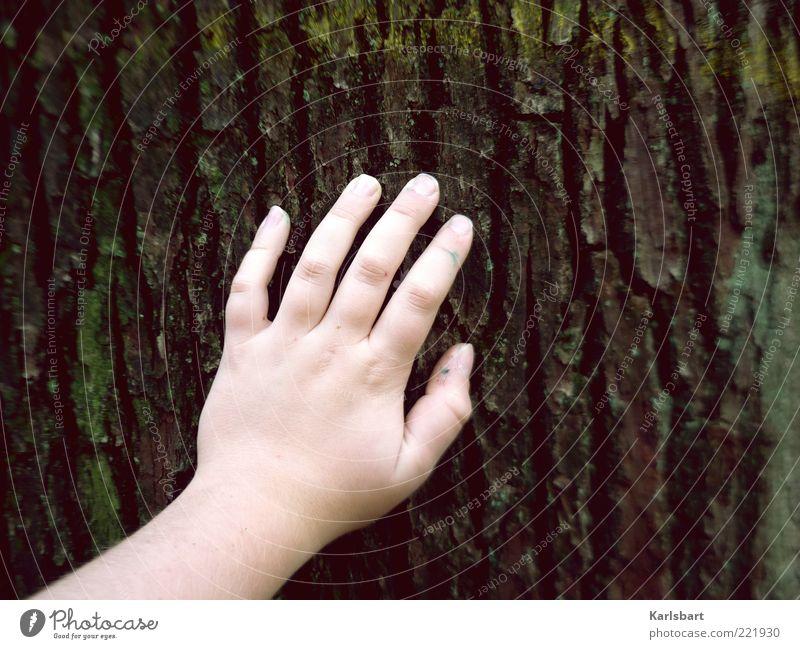 berühren. Mensch Kind Natur alt Hand Baum Sommer ruhig Erholung Umwelt Leben Gefühle Kindheit Finger Lifestyle