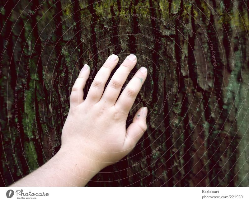 berühren. Mensch Kind Natur alt Hand Baum Sommer ruhig Erholung Umwelt Leben Gefühle Kindheit Finger Lifestyle berühren