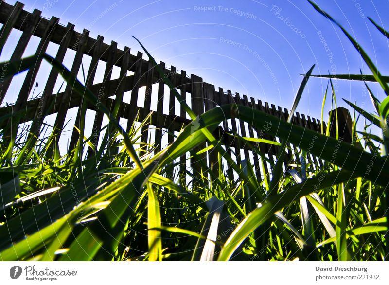 Verschlossen Natur Pflanze Wolkenloser Himmel Sommer Schönes Wetter Gras Garten Wiese blau grün schwarz Tor Pferch Holzzaun Zaun geschlossen Boden Halm