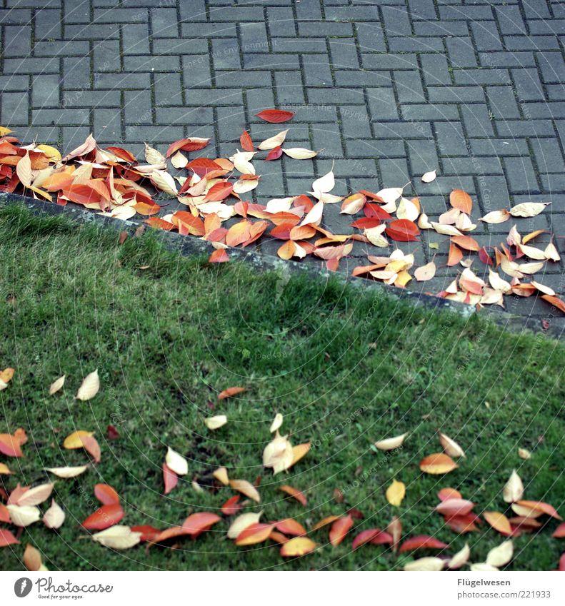 L wie Laub Natur Blatt kalt Wiese Herbst Wind Wetter Umwelt Sturm Pflastersteine Herbstlaub Grasnarbe schlechtes Wetter Pflanze herbstlich Herbstfärbung