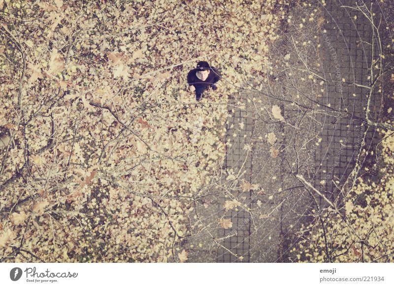 lost maskulin 1 Mensch stehen unten Orientierung Park Herbst Herbstlaub Boden Farbfoto Außenaufnahme Textfreiraum unten Vogelperspektive Blick in die Kamera