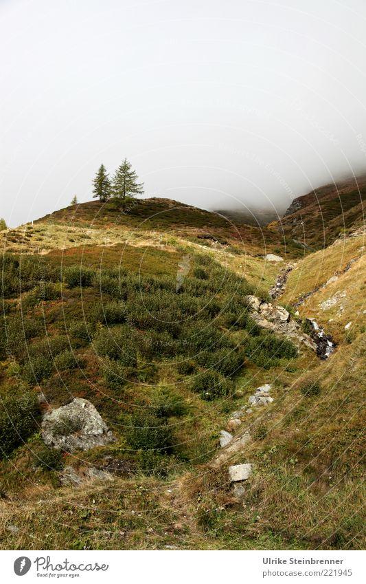 Herbstmatten Natur Baum grün Pflanze Herbst Gras Berge u. Gebirge Landschaft Nebel Umwelt Felsen Sträucher Italien Alpen wild natürlich
