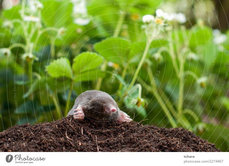 Natur grün Haus Tier schwarz Gesicht natürlich Gras klein Garten braun wild Erde Europa gefährlich niedlich