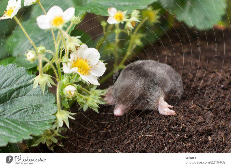 grün Haus Tier schwarz Gesicht natürlich Gras klein Garten braun wild Erde gefährlich niedlich weich Boden
