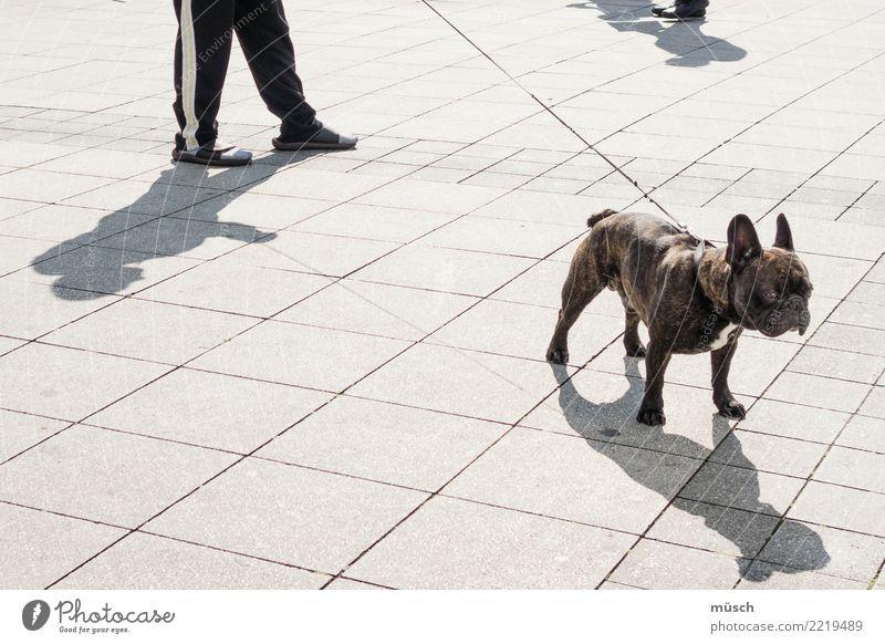 Dogwalk Haustier Hund Erholung gehen Neugier trashig Stadt Freude Lebensfreude Kraft Willensstärke Einigkeit Zusammensein Tierliebe Ordnungsliebe Frustration