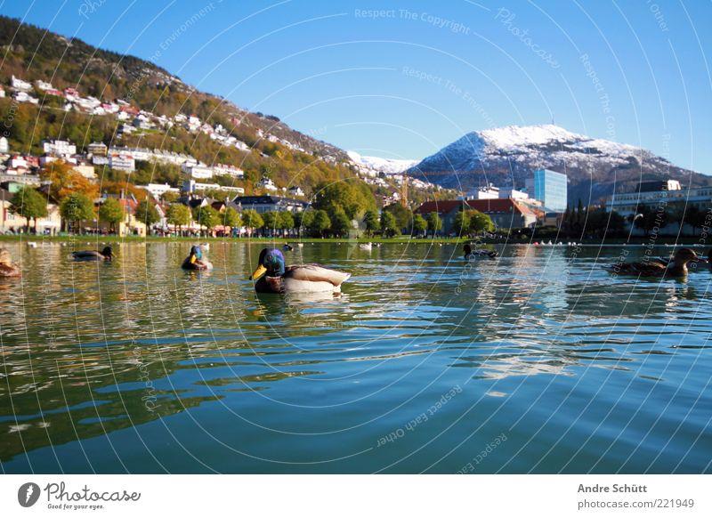 Bergen · Norwegen (2) Wasser blau Winter Ferien & Urlaub & Reisen Tier Berge u. Gebirge See Landschaft Luft Tourismus Tiergruppe Schönes Wetter Teich Ente