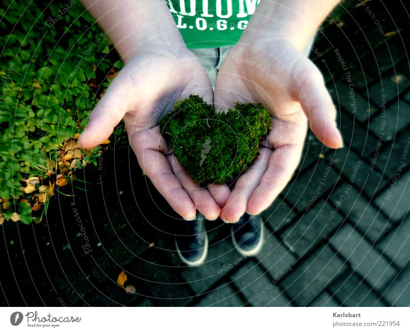 grünes herz. Mensch Kind Natur Hand Sommer Liebe Umwelt Leben Spielen Glück Kindheit Herz Lifestyle festhalten Kleinkind Partner