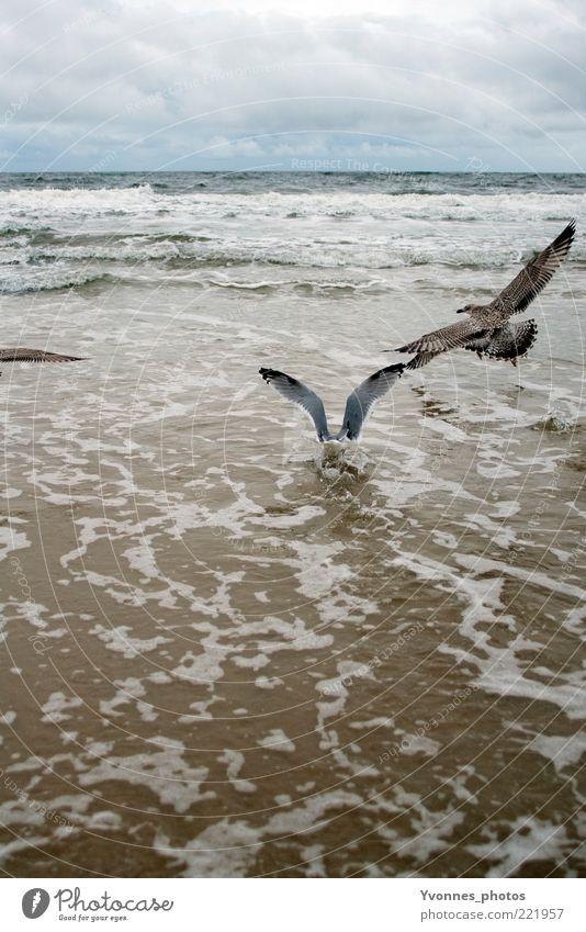 into the sea Ferne Freiheit Strand Meer Wellen Natur Sand Luft Wasser Himmel Wolken Horizont Wetter Wind Küste Ostsee See Flügel Bewegung fliegen warten frei
