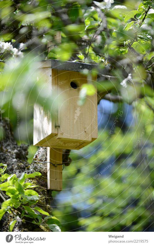 Nistkasten Häusliches Leben Wohnung Traumhaus Garten Hausbau Vogel Tierpaar Tierfamilie beobachten einfach Heimat Nest Nestbau Baum Baumstamm