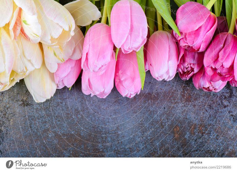 Frische Tulpen auf Grau Blume mehrere rosa Blumenstrauß geblümt Frühling Blütenblatt schön Natur Jahreszeiten Vorbau Design Beautyfotografie frisch natürlich