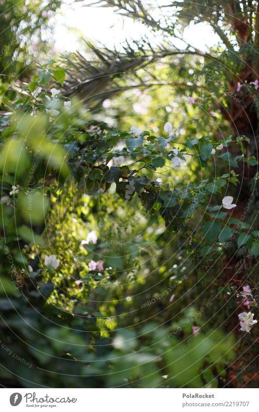 #A# Grün Umwelt Natur ästhetisch Urwald grün Grünpflanze grünen Palme Unschärfe Farbfoto Gedeckte Farben Außenaufnahme Detailaufnahme Experiment abstrakt