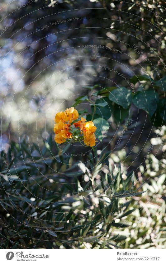 #A# Garden Kunst Kunstwerk ästhetisch Blüte grün Wachstum Blume Natur Blühend Blühende Landschaften Farbfoto mehrfarbig Außenaufnahme Nahaufnahme Detailaufnahme