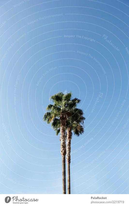 #A# California Umwelt Natur ästhetisch Palme Palmenwedel Ferien & Urlaub & Reisen Urlaubsstimmung Urlaubsort Süden Wärme Insel Dürre blau Farbfoto mehrfarbig