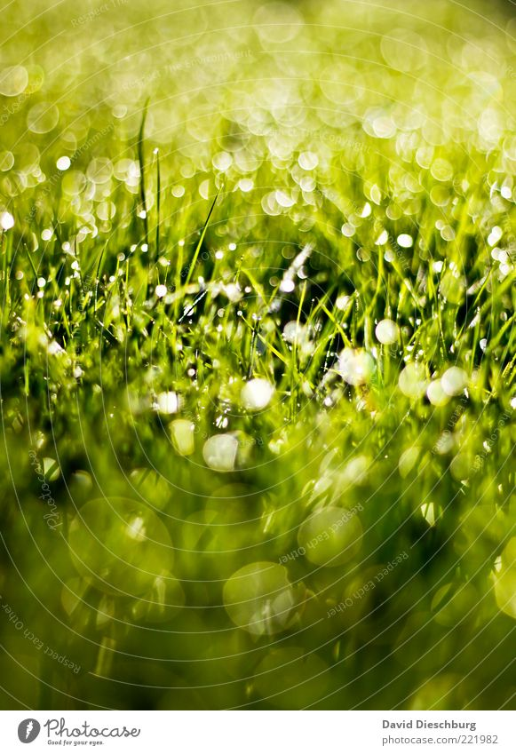 Glitzerparty Natur Pflanze Wasser Wassertropfen Sommer Regen Gras Wiese grün glänzend Tropfen Kreis Grasgeflüster hell Tau schön Farbfoto Außenaufnahme