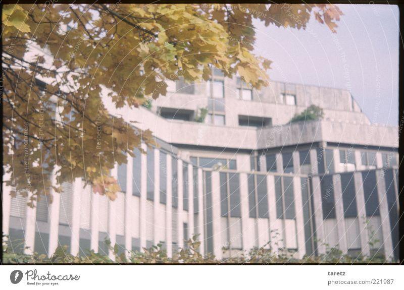 Trutzburg gelb Architektur Mauer rosa Beton geschlossen hoch modern Sicherheit bedrohlich Geldinstitut Bankgebäude Futurismus Schönes Wetter Zweig