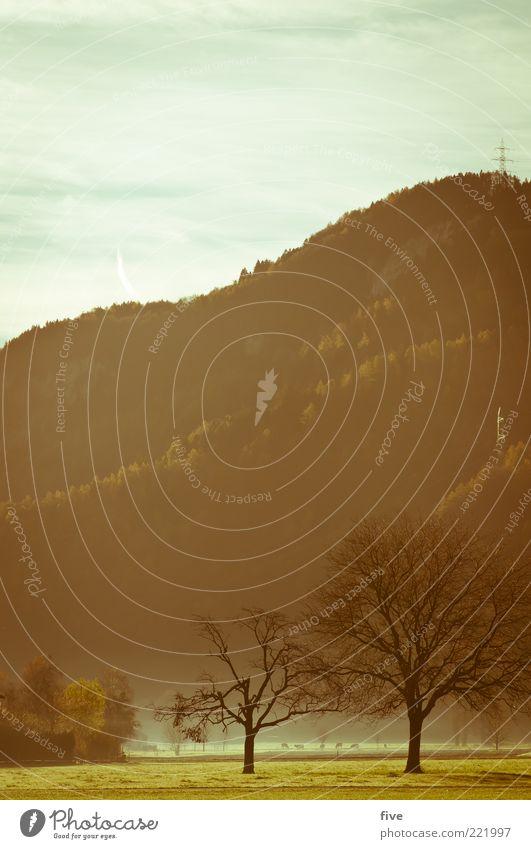 zwei alleine Natur Himmel Wolken Herbst Wetter Nebel Pflanze Baum Gras Grünpflanze Wiese Hügel Berge u. Gebirge frisch kalt Stimmung Wald Farbfoto Außenaufnahme
