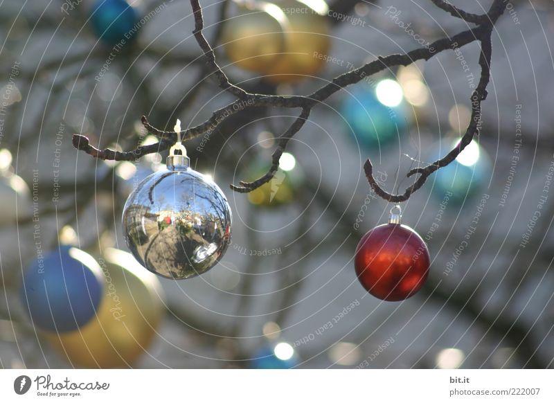 Wieder nicht... Weihnachten & Advent rot Winter Feste & Feiern glänzend Gold gold rund Weihnachtsbaum Kitsch Dekoration & Verzierung Kugel viele silber