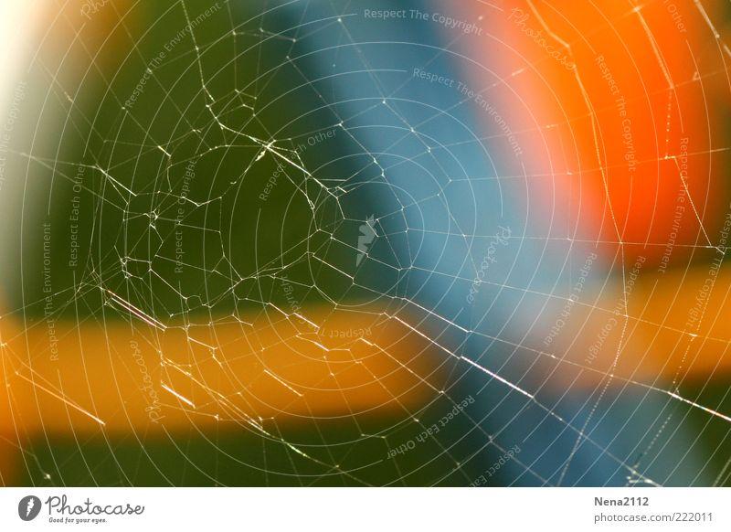 Renovierungsdürftig Natur grün blau kaputt Makroaufnahme Zerstörung Spinnennetz Perspektive Detailaufnahme Unbewohnt gewebt Spinngewebe