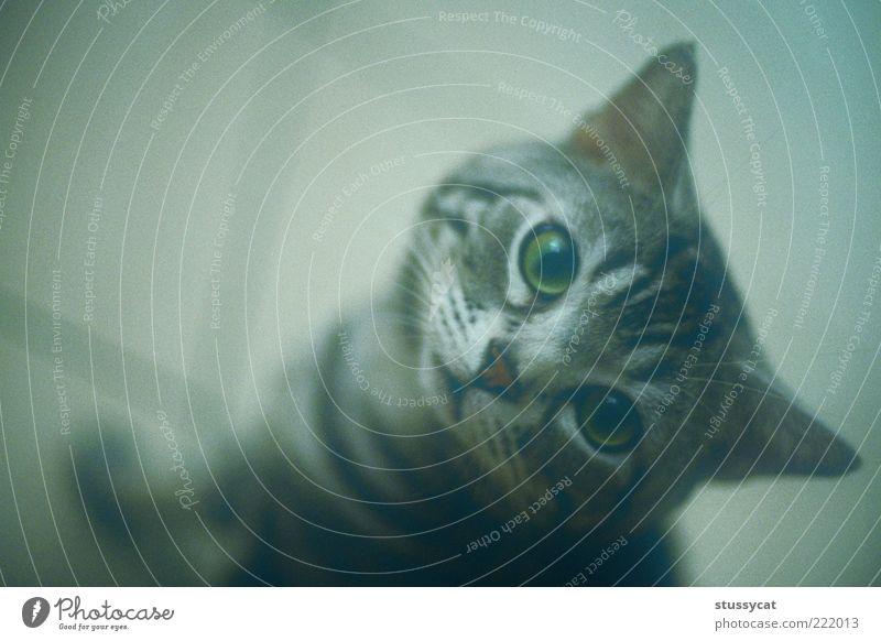Tier Freiheit Katze Denken Wohnung sitzen Haustier Landraubtier Tierporträt Asien Vogelperspektive Taiwan