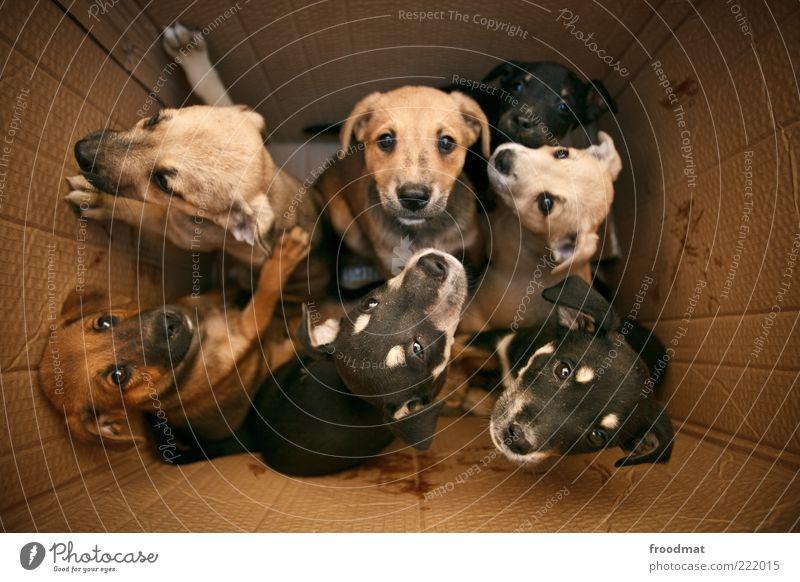 dogs in the box Tier Haustier Hund Tiergruppe Tierjunges Tierfamilie Blick frech Zusammensein kuschlig Neugier niedlich positiv klug Lebensfreude selbstbewußt