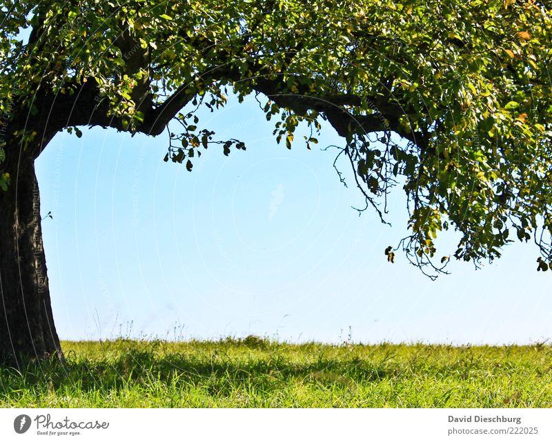 Ruheplatz Natur Pflanze Wolkenloser Himmel Sommer Schönes Wetter Baum Gras Blatt Grünpflanze blau grün schwarz Rahmen Baumstamm Ast einzeln sommerlich Schatten