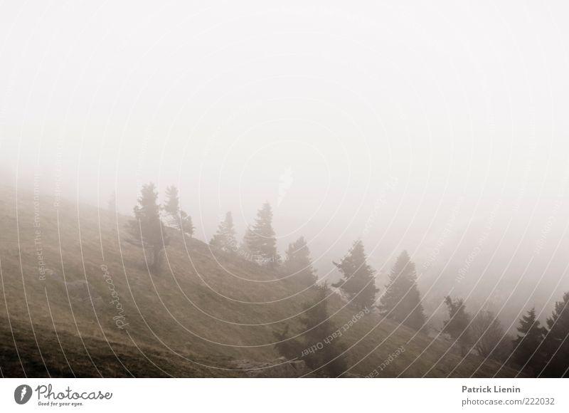 Graue Tage Umwelt Natur Landschaft Pflanze Urelemente Luft Himmel Herbst Wetter schlechtes Wetter Nebel Baum Wald Hügel Berge u. Gebirge grau Stimmung