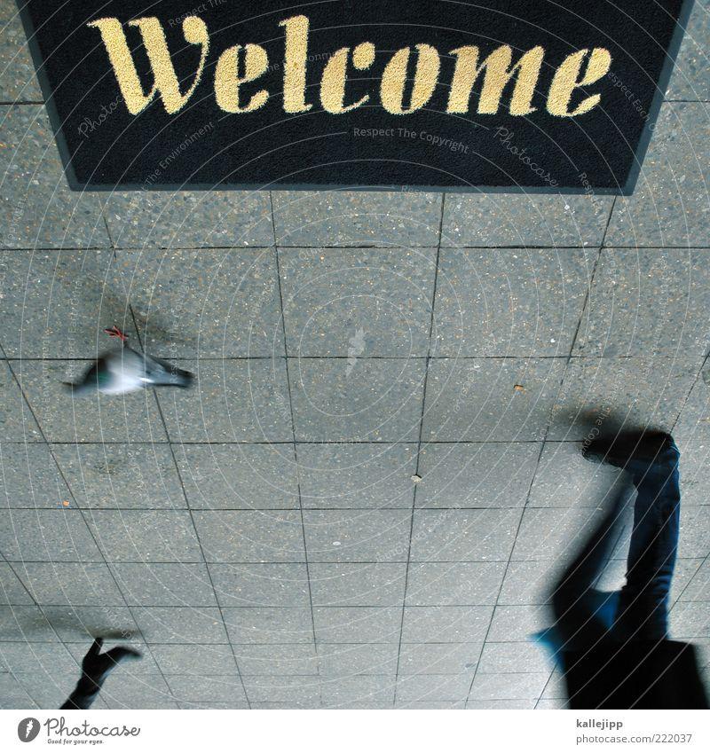 vogelperspektive Mensch Mann Tier Erwachsene Beine Fuß Vogel gehen Schuhe laufen Schriftzeichen Bürgersteig Ladengeschäft Eingang Stiefel Taube