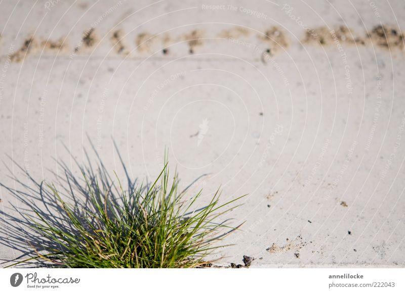 Rasenkante Pflanze Blatt Umwelt Gras Stein Kraft Beton Wachstum Grünpflanze Quaste Detailaufnahme Grasbüschel Grasspitze