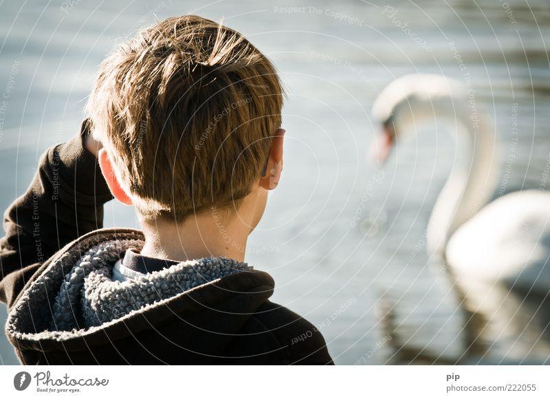 mir schwant was ... maskulin Junge Kopf Haare & Frisuren Ohr Arme Nacken Schulter 1 Mensch Wasser Sommer Schönes Wetter See Schwan Tier Tierliebe Blick