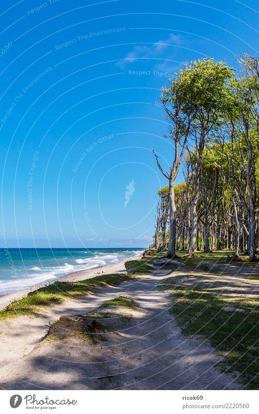 Küstenwald an der Ostseeküste bei Nienhagen Erholung Ferien & Urlaub & Reisen Tourismus Strand Meer Natur Landschaft Wasser Baum Wald Wege & Pfade blau Romantik
