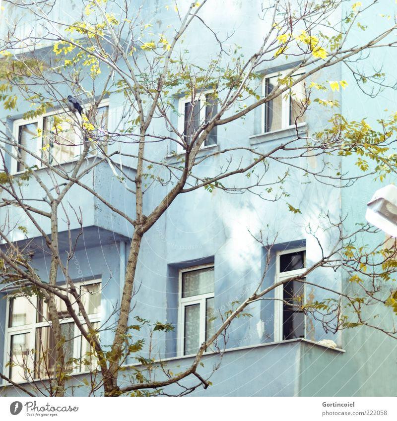 Novembersonne Baum Haus Gebäude Fassade Balkon Fenster hell Lichtfleck türkis Istanbul Türkei Cihangir Farbfoto Außenaufnahme Lichterscheinung Sonnenlicht