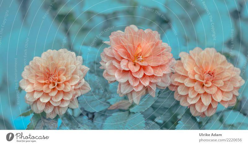 Drei Schönheiten Natur Pflanze Sommer Blume Erholung ruhig Leben Herbst Blüte außergewöhnlich Garten orange Design Zufriedenheit Park Dekoration & Verzierung