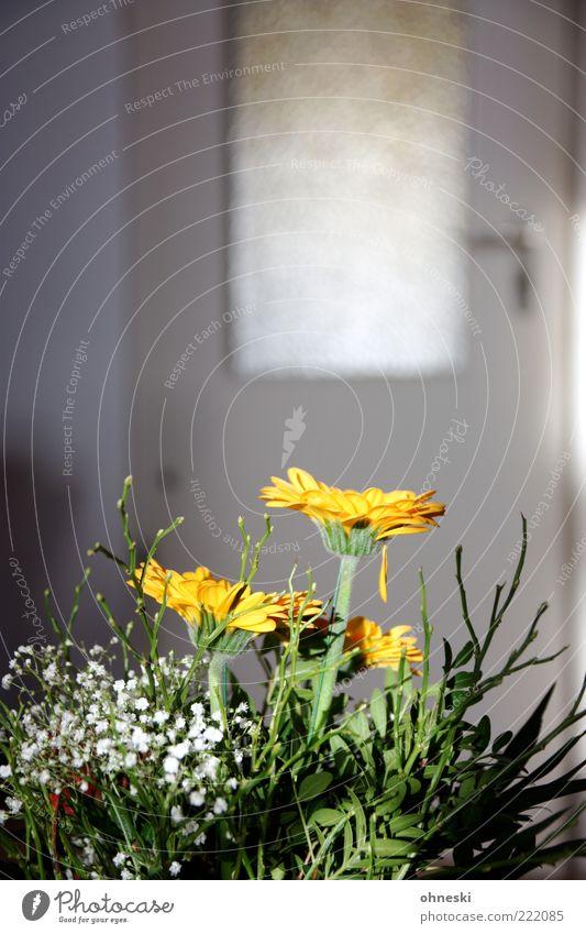 Vielen Dank für die Blumen Blume gelb Blüte Raum Tür Wohnung Dekoration & Verzierung Blumenstrauß Lebensfreude Wohnzimmer Grünpflanze