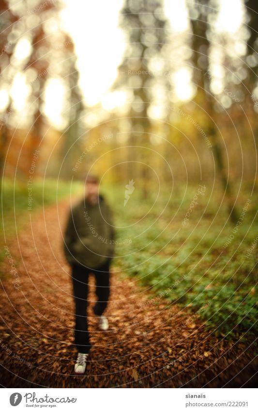 wo deine füsse stehn... Mensch Mann Natur Jugendliche Wald Leben Herbst Wege & Pfade Erwachsene gehen maskulin Spaziergang vorwärts Surrealismus gegen anonym