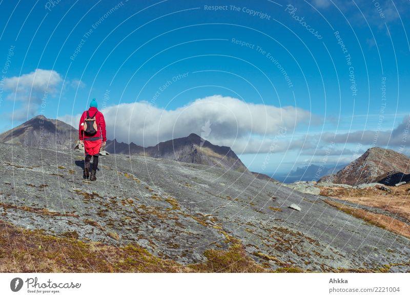 Wolken besuchen, Junger Mann in Rot auf Gipfelkurs, Lofoten Erholung ruhig Ferien & Urlaub & Reisen Ausflug Abenteuer wandern 1 Mensch Natur Landschaft