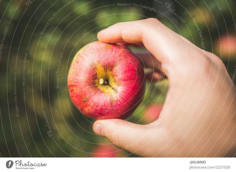 Abschluss oben der Hände, die Apfel anhalten Lebensmittel Frucht Lifestyle Gesundheit Gesunde Ernährung Diät Essen schön einzigartig lecker natürlich saftig