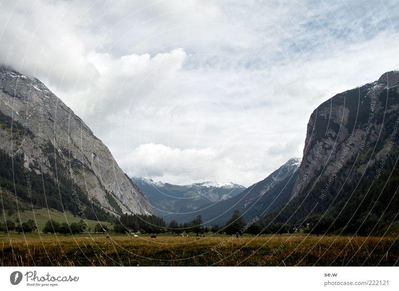 August Himmel Wolken Wetter Wind Gras Wiese Feld Alpen Berge u. Gebirge Kalkalpen Karwendelgebirge Gipfel Schneebedeckte Gipfel Alm dunkel Ferne schön