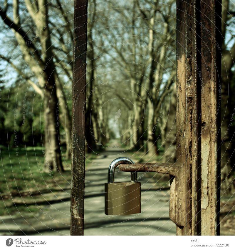geschlossen Natur alt Baum ruhig Wiese Wege & Pfade Park geheimnisvoll Tor Stahl Rost Schloss Barriere Allee Spazierweg