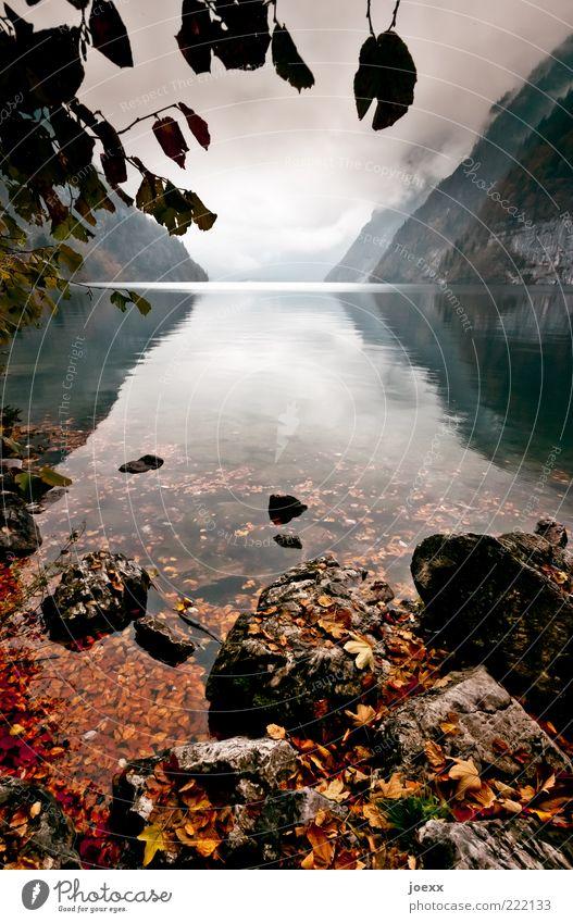 Wandel Natur Landschaft Wasser Wolken Herbst Schönes Wetter schlechtes Wetter Blatt Berge u. Gebirge Seeufer Ferne nah grün ruhig Einsamkeit einzigartig Kraft