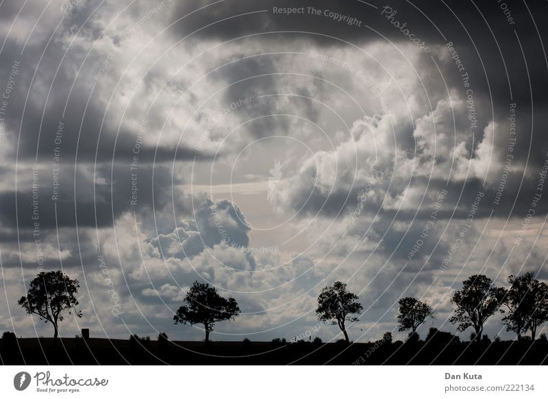 Wetterumschwung Natur Baum Wolken dunkel Landschaft Angst Wind nass Horizont groß gefährlich bedrohlich außergewöhnlich Vergänglichkeit Sturm Unwetter