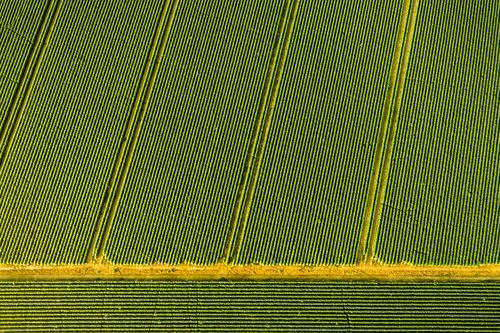 Feld Natur grün Landschaft Umwelt Ordnung Landwirtschaft Handel ökologisch Forstwirtschaft Nutzpflanze Nutztier wirtschaftlich Monokultur