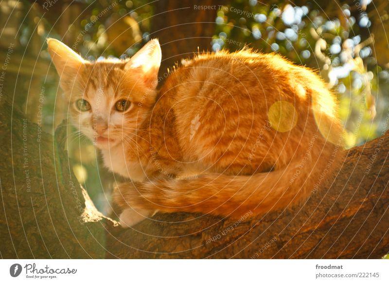 cuteness overload Tier Sonnenlicht Sommer Schönes Wetter Baum Haustier Katze 1 Tierjunges beobachten hocken sitzen frech kuschlig Neugier niedlich klug