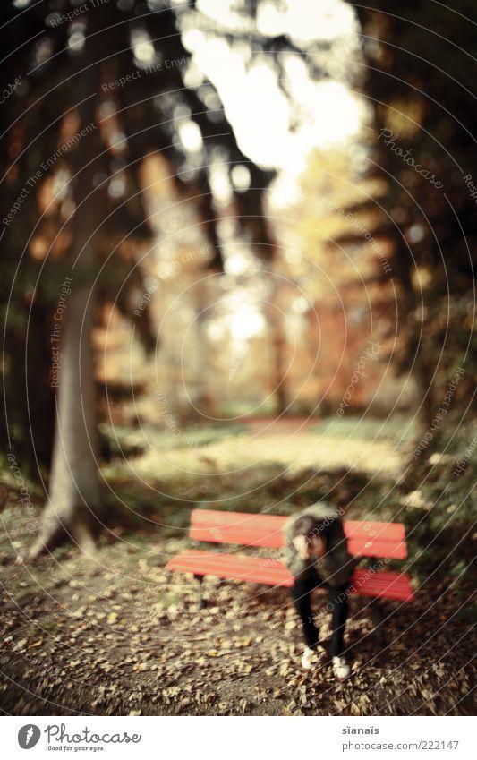 bankrot Mensch maskulin Mann Erwachsene Natur Herbst Schönes Wetter Wald Park sitzen Traurigkeit warten Armut Müdigkeit Schmerz Zukunftsangst Verzweiflung