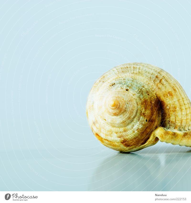 Mehr Schneck² Tier kalt glänzend ästhetisch Spirale maritim Schneckenhaus Gehäuse Wasserschnecken