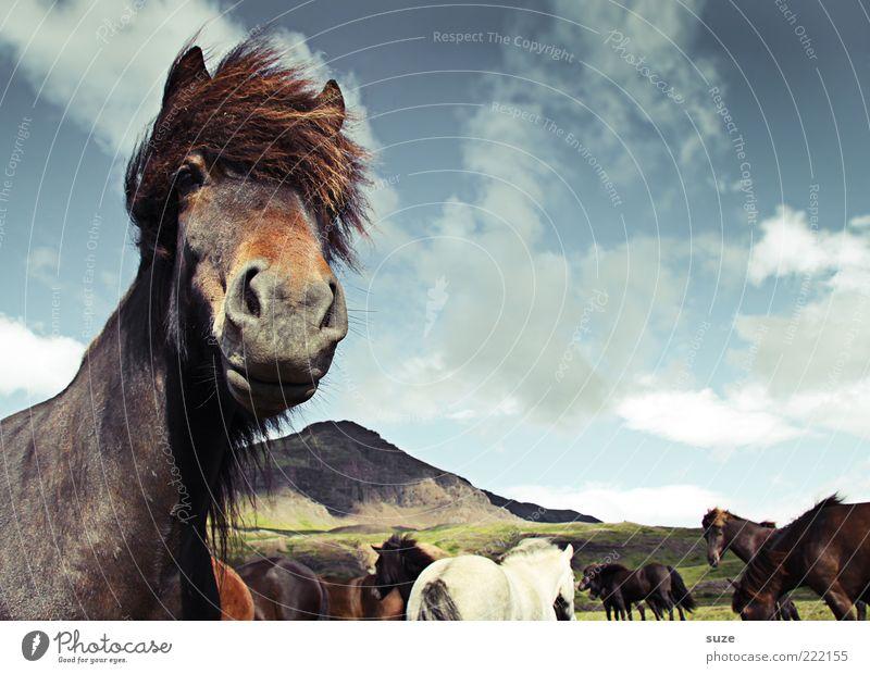 Top-Model Berge u. Gebirge Natur Landschaft Tier Himmel Wolken Wind Nutztier Wildtier Pferd Tiergesicht 1 Herde stehen warten ästhetisch Freundlichkeit